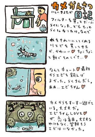 カメかんさつ日記